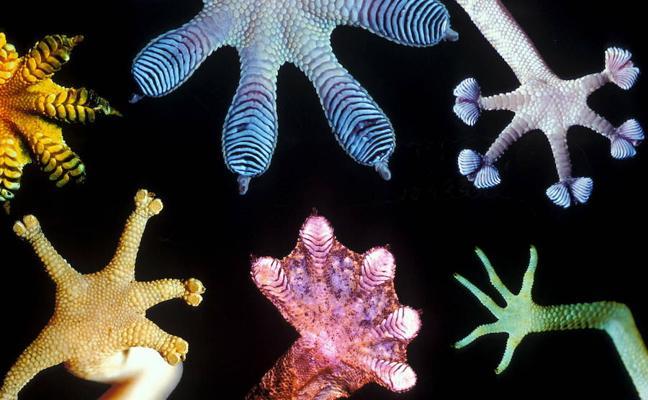 Suelas antideslizantes inspiradas en los pies de un lagarto