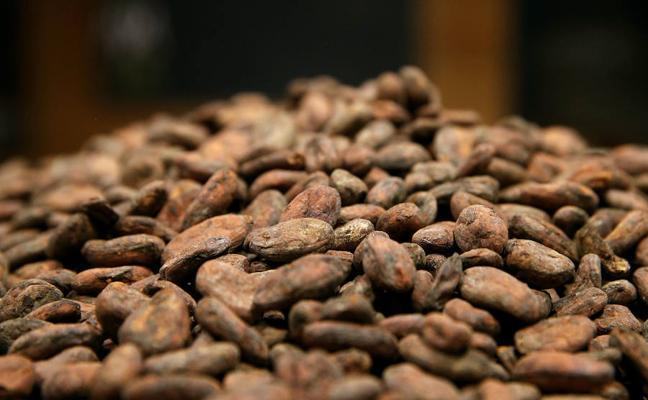 Expertos dice que el cacao ayuda a regular el sistema inmunitario