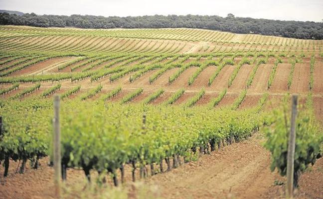 Ribera de Duero: Tierra de vinos y lechazo