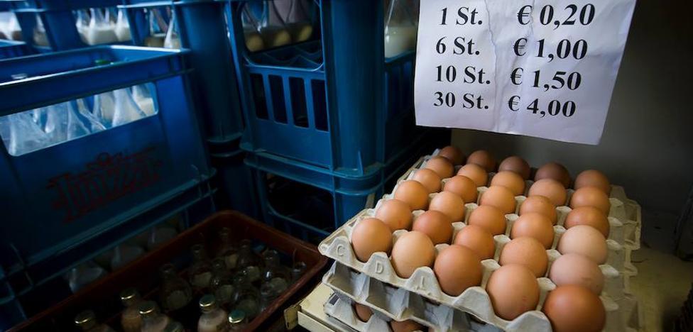 Cinco países en alerta sanitaria por huevos contaminados