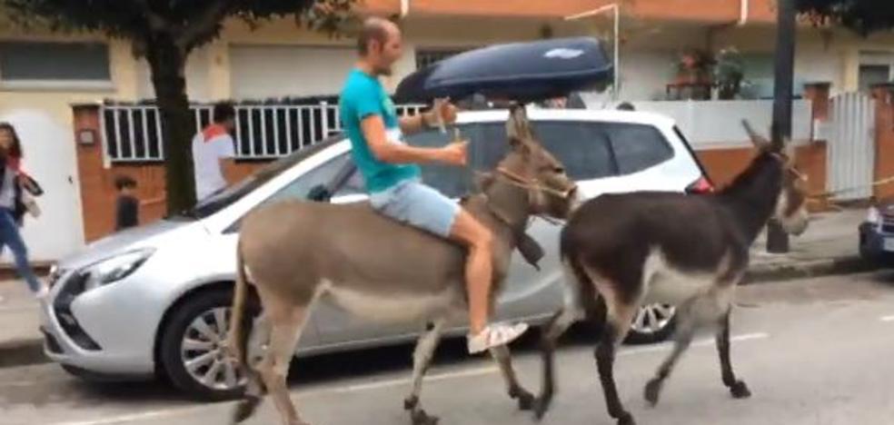 Denuncian maltrato animal en una carrera de burros