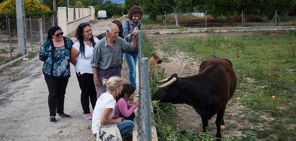 Anulan la pena de muerte a la vaca 'Margarita'