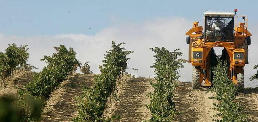 Cuarenta bodegas alavesas renuncian a abandonar la denominación de origen Rioja