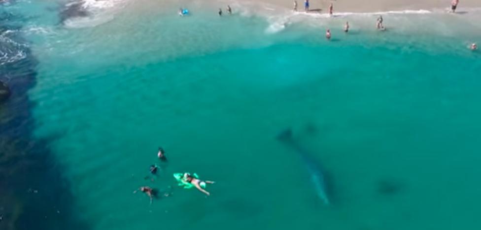 Una ballena perdida nada al lado de los bañistas y ellos ni se inmutan