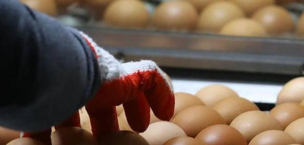 Europa autoriza a consumir las 22.000 unidades de huevo líquido interceptadas en Bizkaia