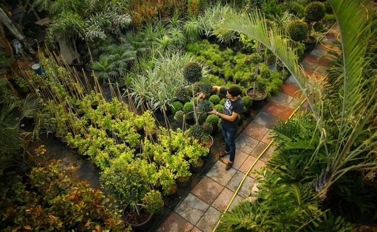 Un jardín para la enfermería