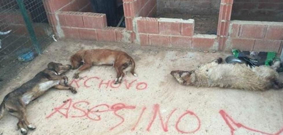 Mueren envenenados los perros del joven que mató al último Toro de la Vega