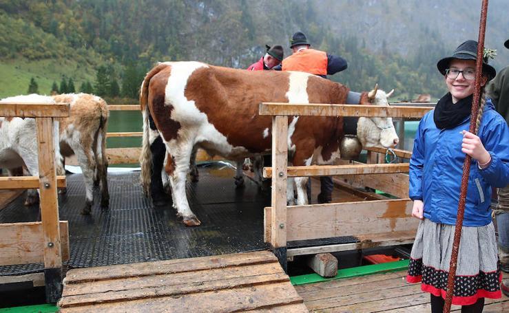El ganado vuelve a casa tras 100 días de 'vacaciones'
