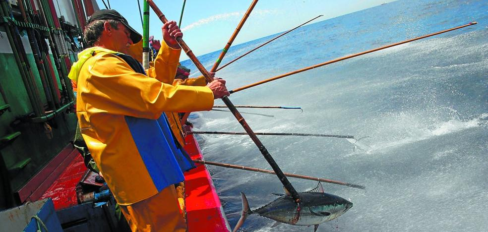 La campaña vasca del bonito se cierra con cifras récord de capturas y rentabilidad