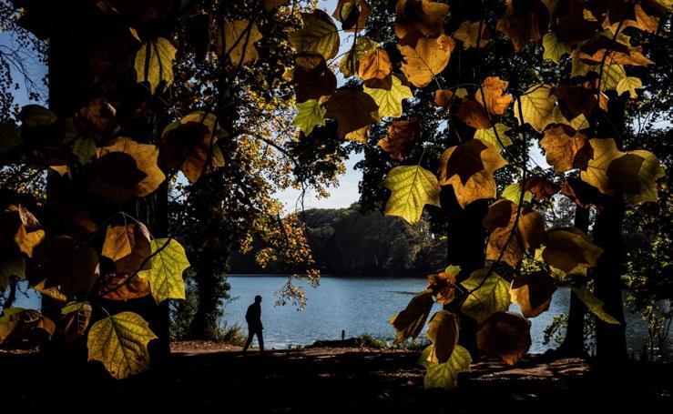 Amarillo, el color del otoño