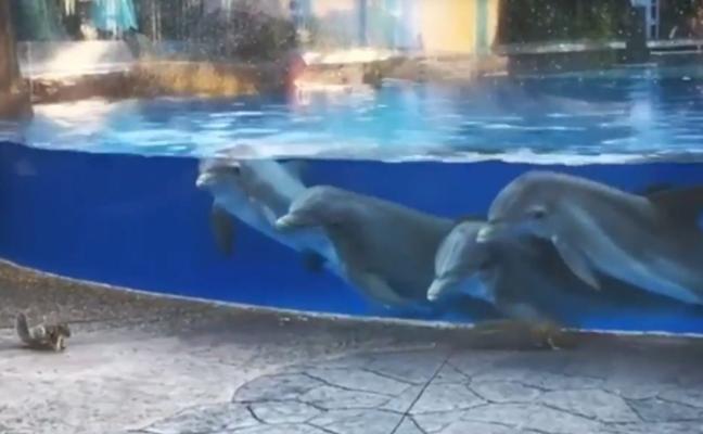Estos delfines alucinan al ver a unas ardillas merodear junto a ellos