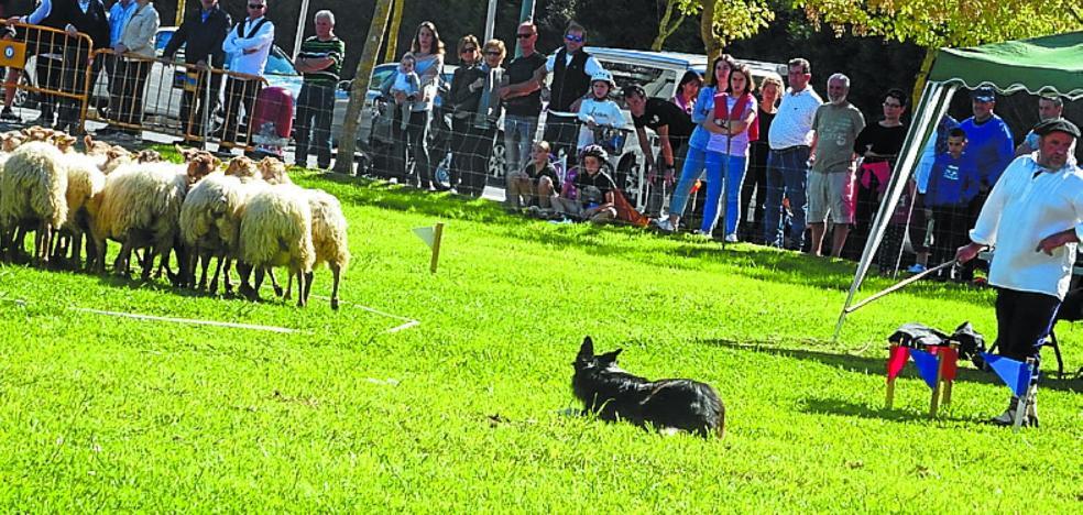 'Rex', de José Luis Saizar, gana el concurso de perro pastor