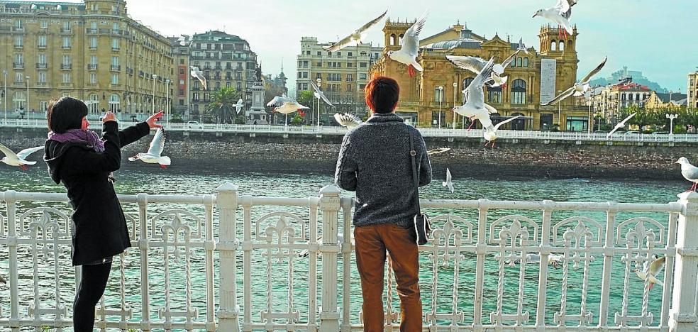 1.400 gaviotas en Donostia: ¿estamos ante una plaga?