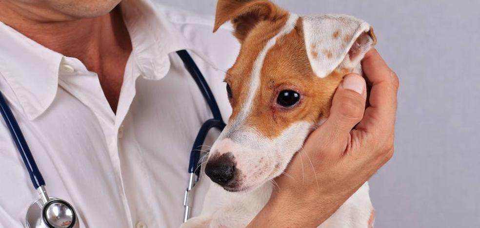 Permiso laboral para cuidar al perro
