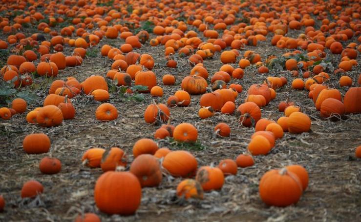 Listos para Halloween