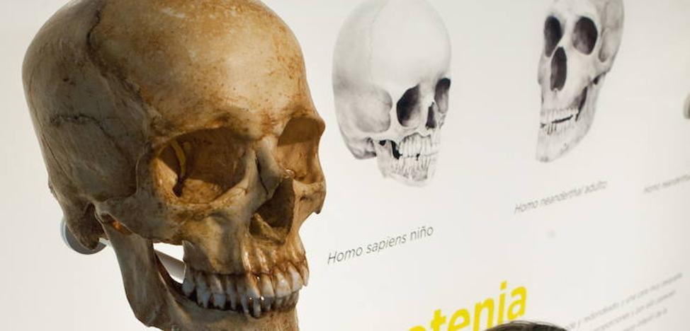 Nuevas evidencias sobre el origen del 'Homo sapiens' indican que no existen razas