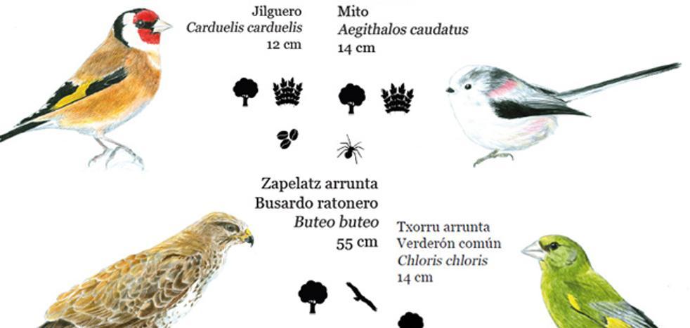 Identificadas 99 especies de aves nidificantes en Donostia