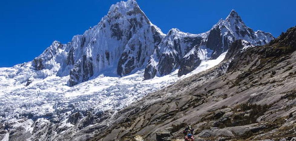 Un pisco en la cordillera de los Andes