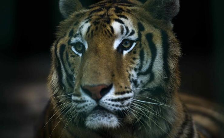 Descubre el Zoológico Nacional de Nicaragua