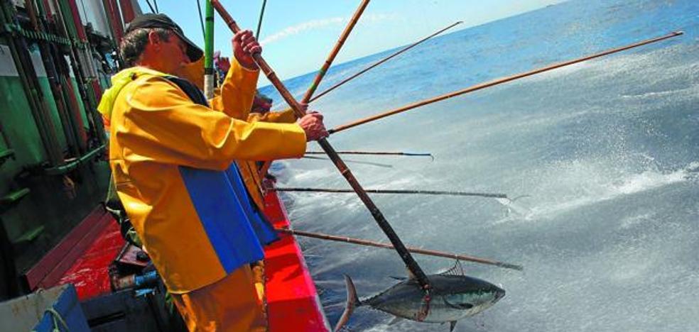 La pesquería del bonito del Norte de este año incrementa las capturas hasta las 6.760 toneladas