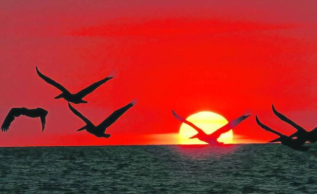 El cambio climático reescribe la ornitología