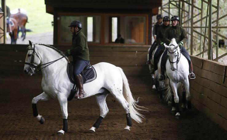 Chile recupera el caballo de pura raza española cinco siglos después
