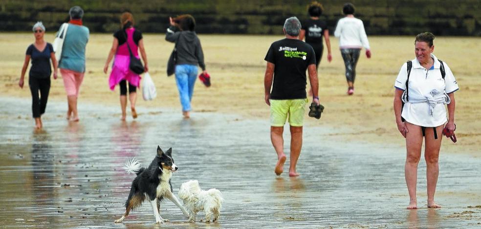 Perros y playa, ¿un problema de convivencia?