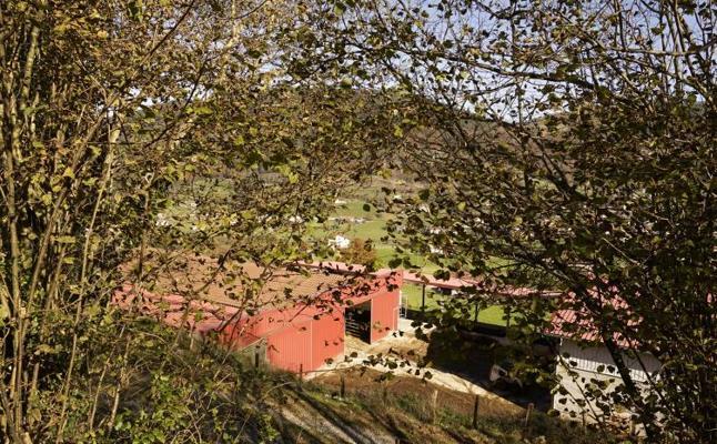 Las pérdidas por la muerte de 45 vacas en Berasategi ascienden a 90.000 euros