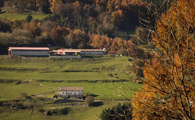 La Fiscalía Medioambiental de Gipuzkoa investigará la muerte por inanición de 45 vacas en Berastegi