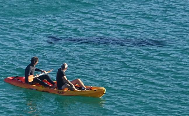 Aparece una ballena en Zarautz