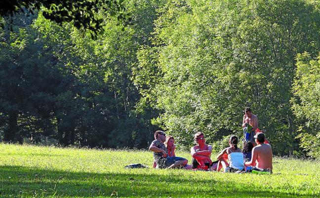 El Ayuntamiento talará árboles enfermos de la zona de Listorreta
