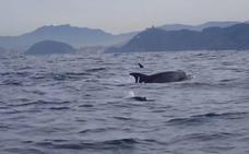 Los delfines acompañan al aventurero Dunnett entre Donostia y Zarautz