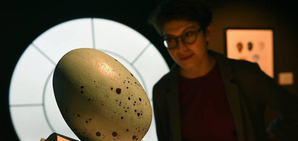 El universo de Harry Potter llega a Madrid en una gran exposición para muggles