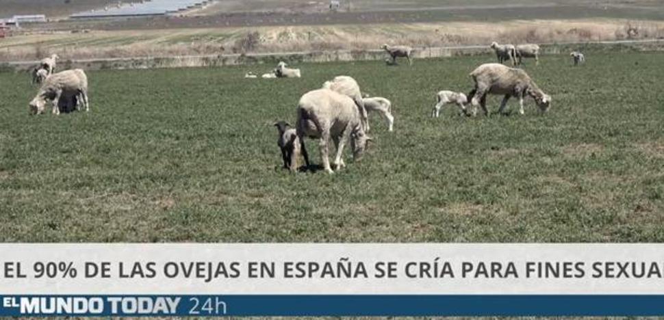 Una jueza bilbaína amenaza con acciones legales a 'El Mundo Today' por injuriar a los pastores