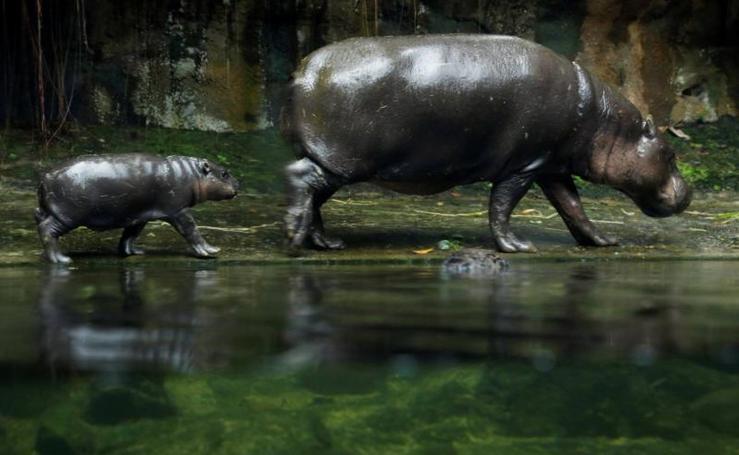 Los nuevos residentes del zoo de Singapur