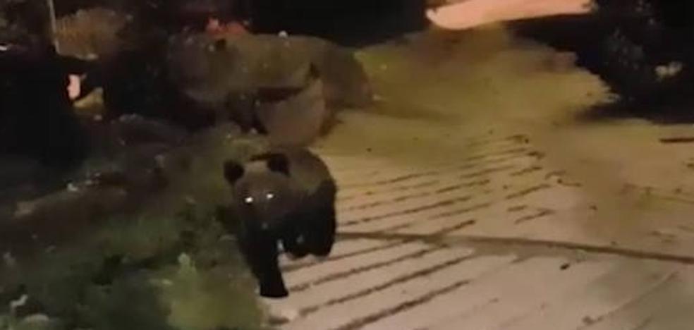 Alarma en un pueblo de Cantabria por la llegada de un segundo oso en busca de comida