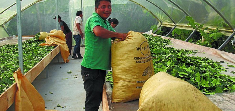 La ONG Hiruatx pone en marcha el proyecto de recogida de guayusa