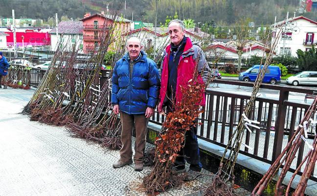 Mercado de Ordizia. La planta forestal regresa al mercado
