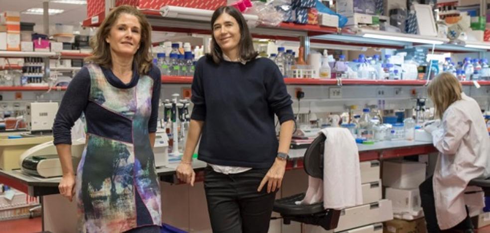 Investigadores del CNIO curan la fibrosis pulmonar en ratones con una terapia génica