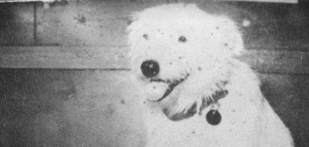 'Callejero', de Alberto Cortez: himno a Fernando, el exquisito perro sin dueño