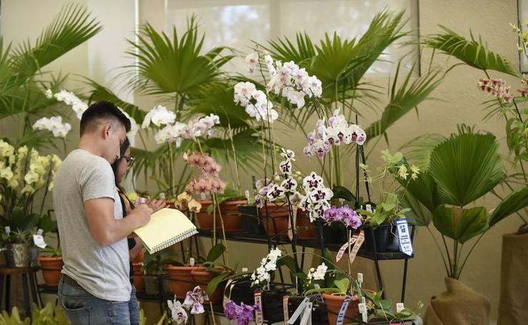 Las orquideas más bellas
