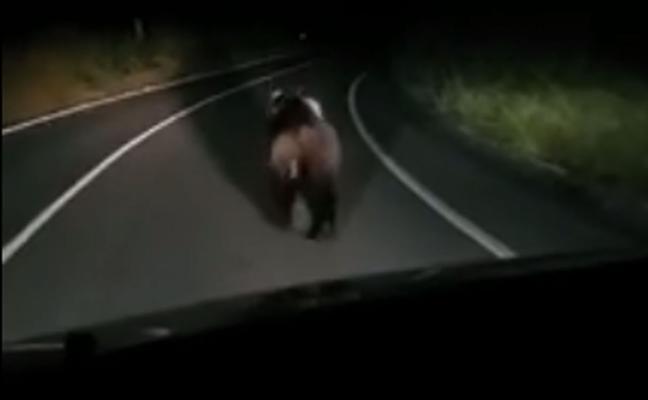 Perseguir a un oso con el coche le puede costar una multa de 200.000 euros