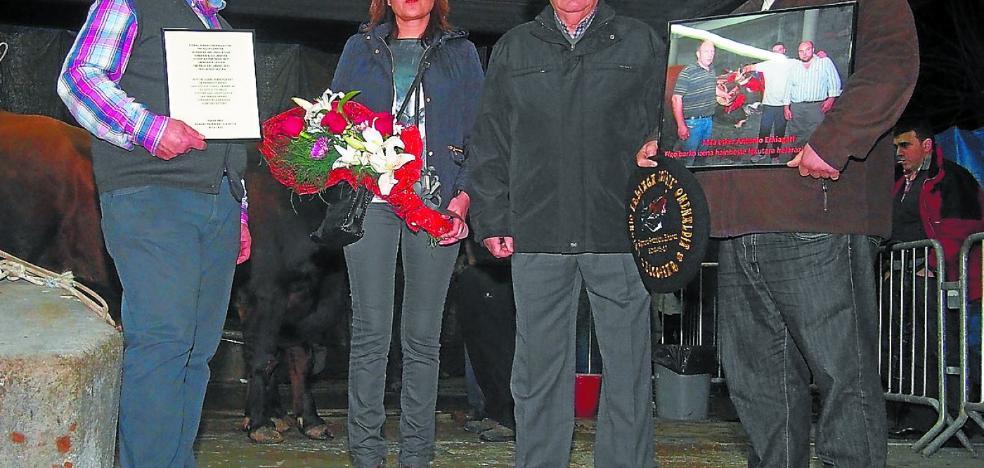 Sigma acogerá el sábado la final del Campeonato de Euskadi de Bueyes
