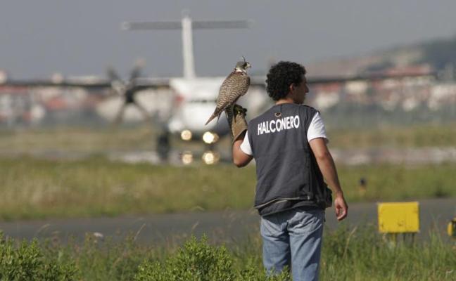 Fomento dice que el aeropuerto de Hondarribia cumple todas las medidas de seguridad, incluido el servicio de halconeros