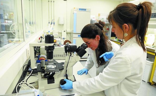 Desarrollan en Donostia un método para combatir células cancerígenas con calor