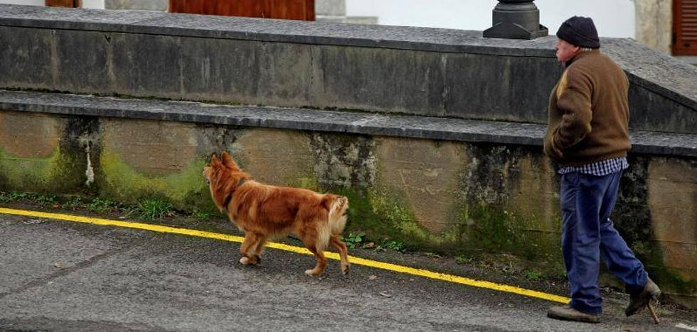 Un perro por cada siete guipuzcoanos