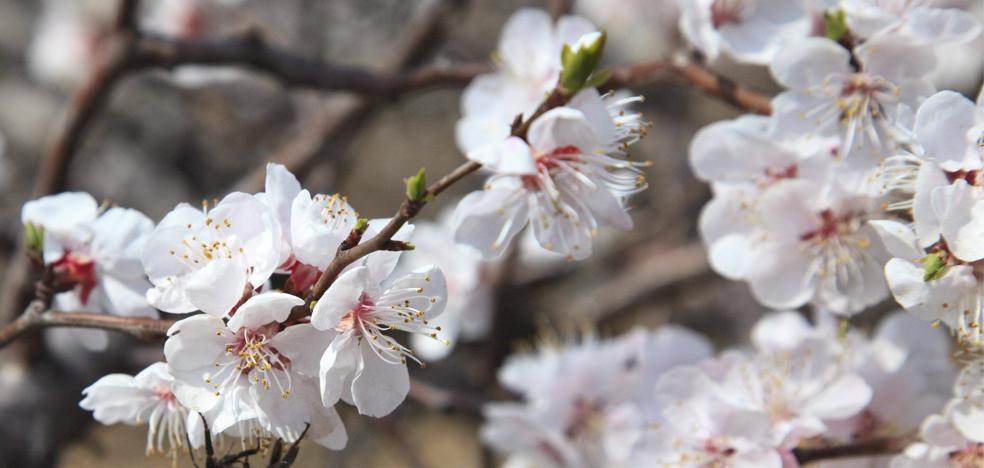 La primavera comenzará el 20 de marzo y será más lluviosa al principio y más seca de lo normal en abril y mayo
