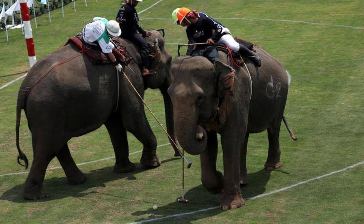 Torneo de polo sobre elefantes