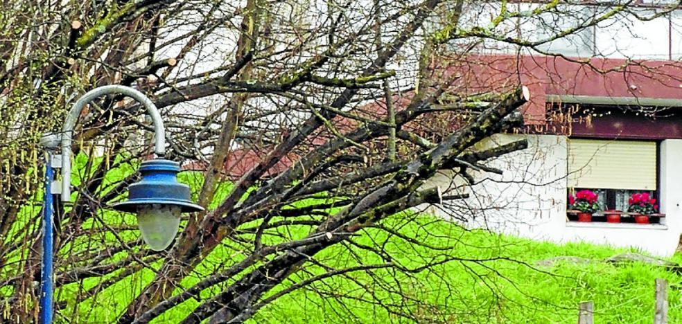 Eguzki denuncia una tala de árboles sin licencia