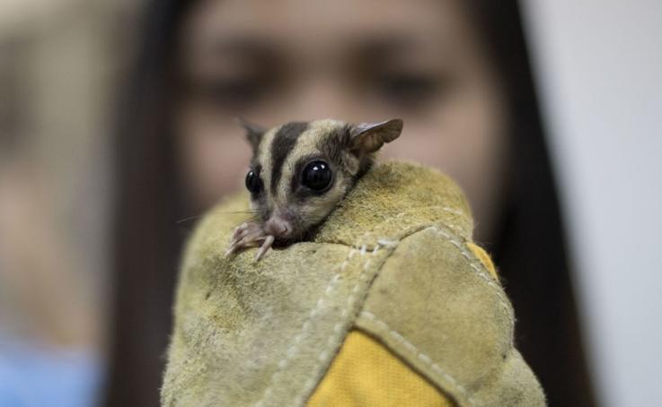 Rescatados del tráfico ilegal de mascotas